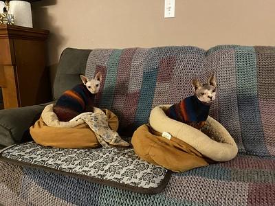 Two of Jen (@seaturtlecraftco)'s cats are now twinning! Pattern is a modified Mini Dachshund Piggy-Wiggy Dog Sweater by Valya Boutenko. Yarn is Schoppel Wolle Zauberball Starke 6.