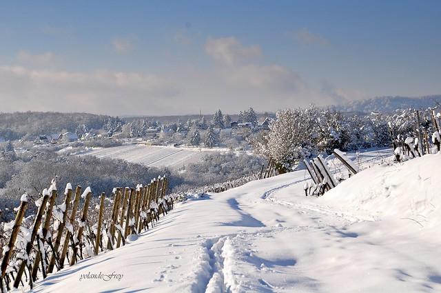 De la neige (enfin !) pour l'Alsace ....