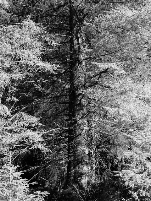 Lighting the Tree - Feb 2020