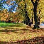 Autumn leaves at Avenham Park