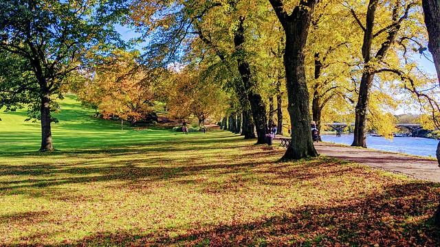 Autumn leaves at Avenham Park
