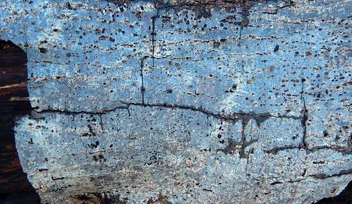 Close-up of bark of a fallen tree