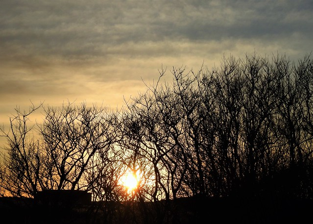 Sunrise Through Winter Branches