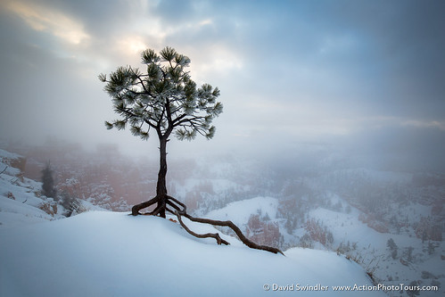 Snowy Tree at Bryce | by David Swindler (ActionPhotoTours.com)