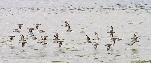 Fast Flock