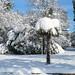 Schnee Spaziergang Friedrichshafen am Bodensee Januar 2021 hyyperlic-41