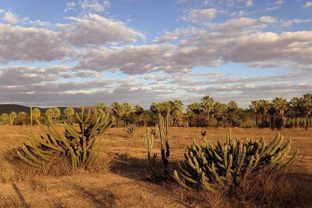 Biome transition - brazilian savanna - semiarid / Transição de biomas - Cerrado - Caatinga