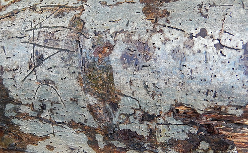 Close-up of tree bark with a name carved into it