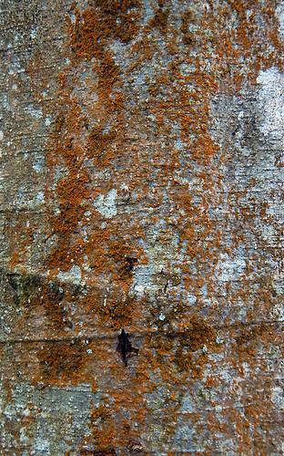 Close-up of tree bark with orange lichen