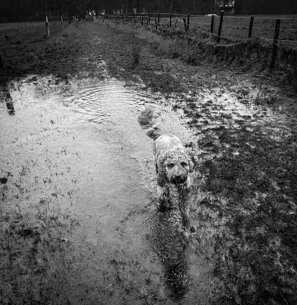 Finding the wettest muddy bits