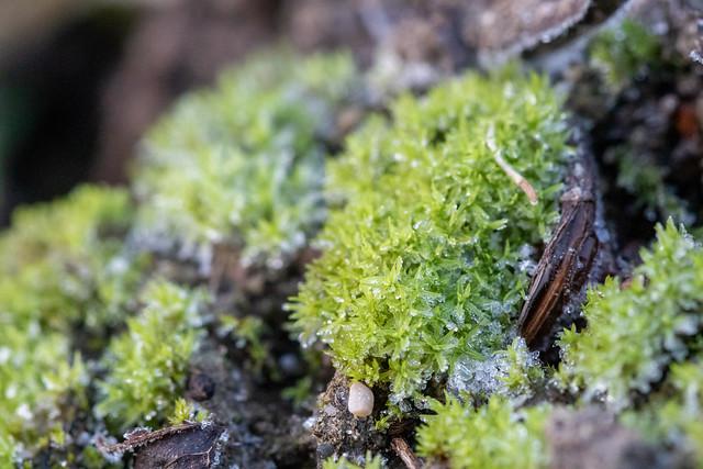 Frost & Moss
