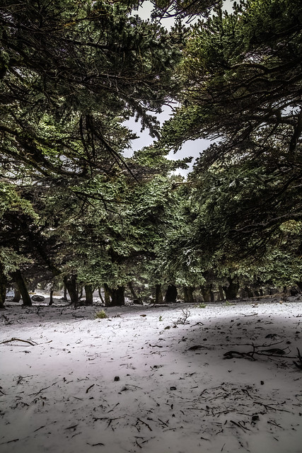 The first snow of 2021