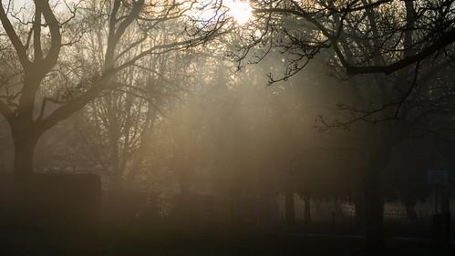 Misty winter morning, Bantock Park