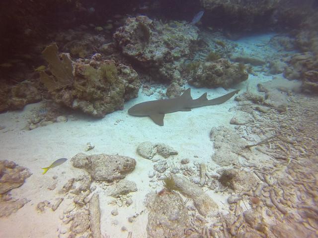 AM 17 Jan 2021 Peaceful Diving Florida Keys