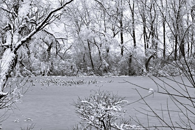 Wonders of Winter #14