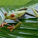 Costa Rica Photography Adventure January 2022