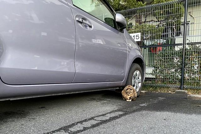 Today's Cat@2021−01−16