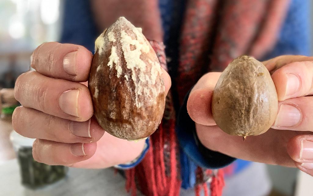 Avocado stones
