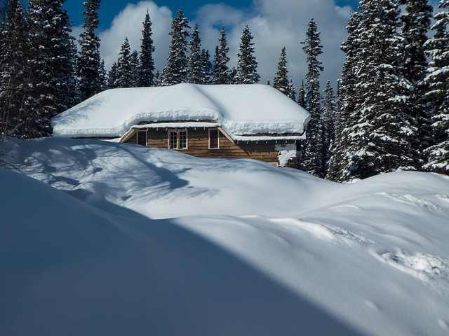 Drowning in snow - Lake Louise area, Alberta, Canada