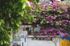 台中市・精誠八街|Taichung City・Taiwan