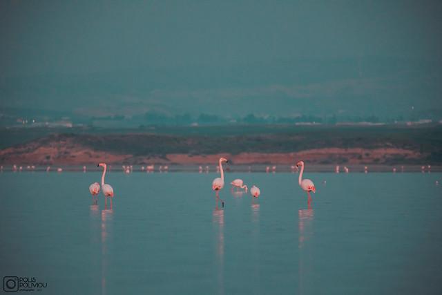 Larnaca Salt Lake - January 21 (9)
