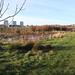 "<p><a href=""https://www.flickr.com/people/113359486@N08/"">Alan Longmuir.</a> posted a photo:</p>  <p><a href=""https://www.flickr.com/photos/113359486@N08/50840792016/"" title=""St Fitticks Community Park,,Aberdeen_jan 21_1114""><img src=""https://live.staticflickr.com/65535/50840792016_29fe342216_m.jpg"" width=""240"" height=""160"" alt=""St Fitticks Community Park,,Aberdeen_jan 21_1114"" /></a></p>"