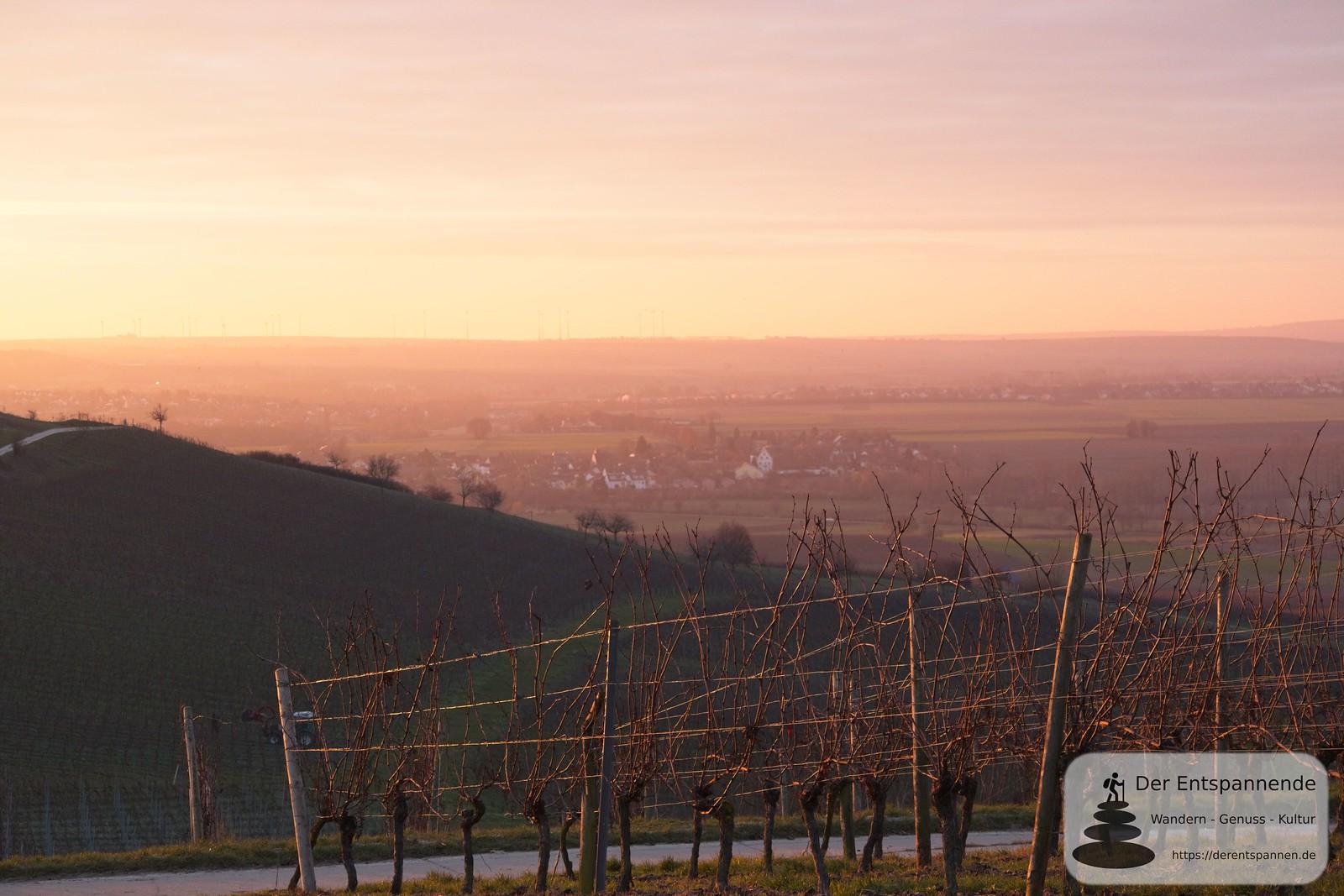 Sonnenaufgang Schönste Weinsicht 2020 Rheinhessen: Blick auf Schloss Hahnheim