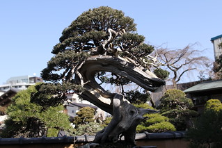 Bonsai Art Museum Shunka-en | by walking.biking.japan