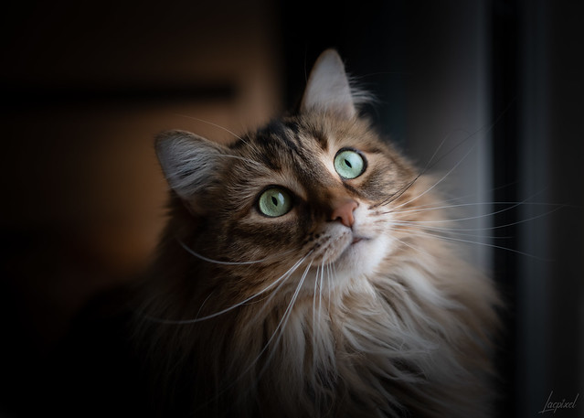 Looking at the snowflakes falling down. Happy Caturday !!!