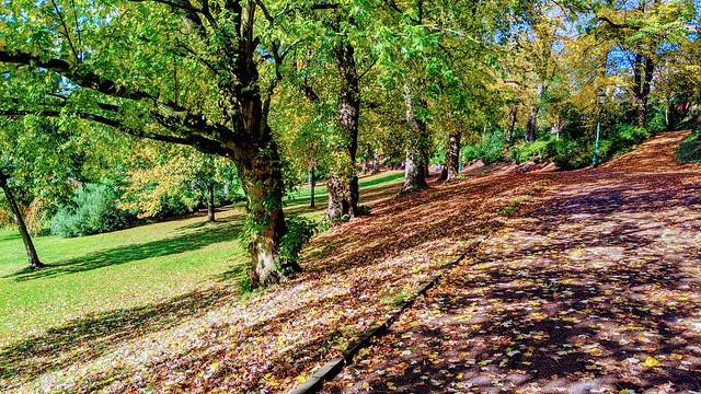 Avenham Park scene