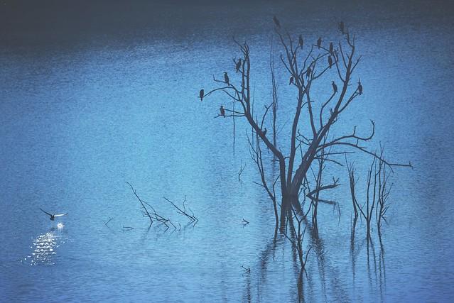 Dieciséis pájaros/Sixteen birds