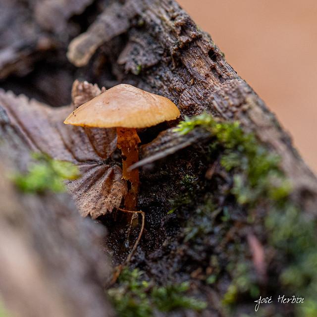 Champignon des bois