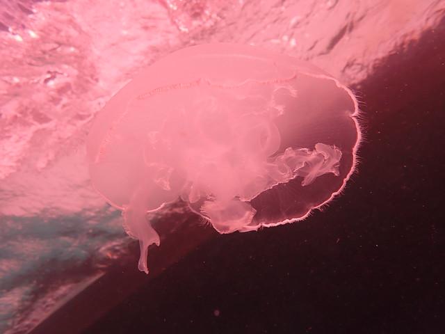 PM 16 Jan 2021 Peaceful Diving Florida Keys