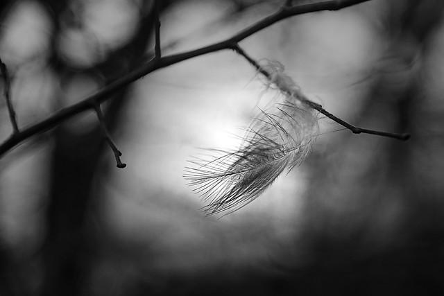Vom Winde verweht /  Blown by the wind