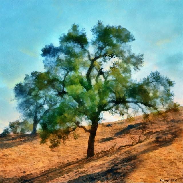 Hillside Blue Oaks