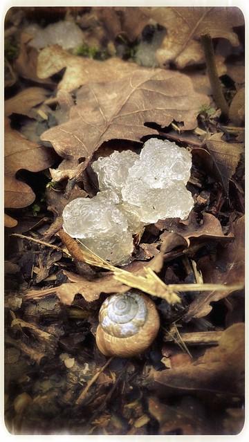 It's A Kind Of Magic...Mushroom?