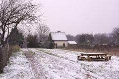 Winter in Koningslo (EXPLORED)  (由  ost_jean