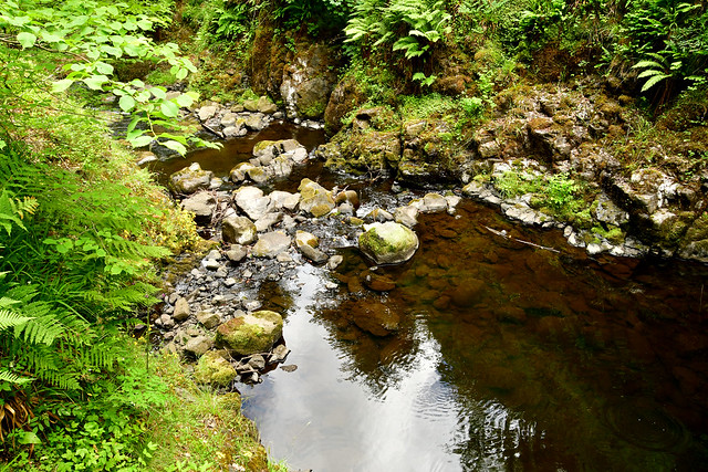 180708 Noord-Ierland - Giants Causeway - 12 Glenariff Forest 1043