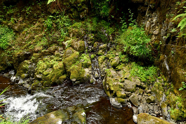 180708 Noord-Ierland - Giants Causeway - 12 Glenariff Forest 1041