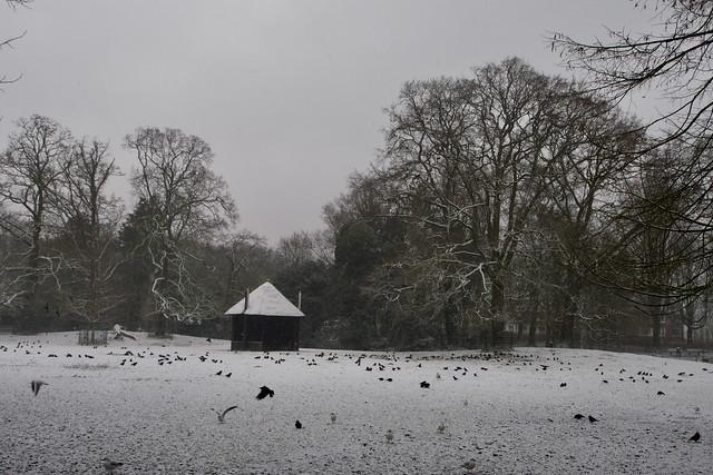 Eindelijk een klein beetje sneeuw / Finally a little bit of snow