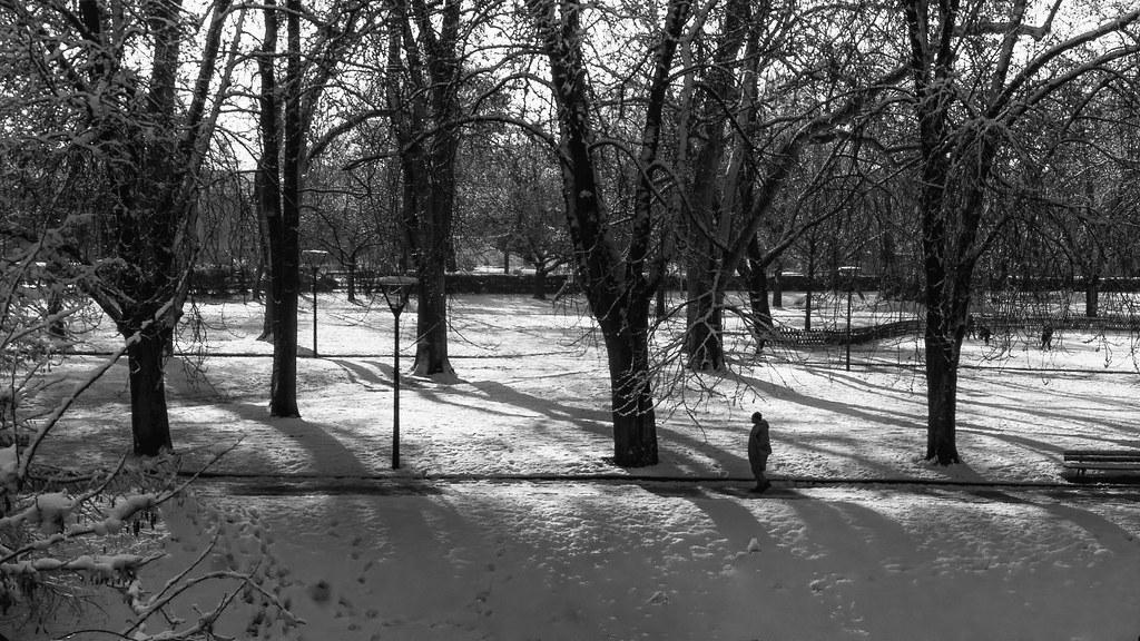 Seul dans le parc enneigé... 50841825326_b8cbd90e8d_b