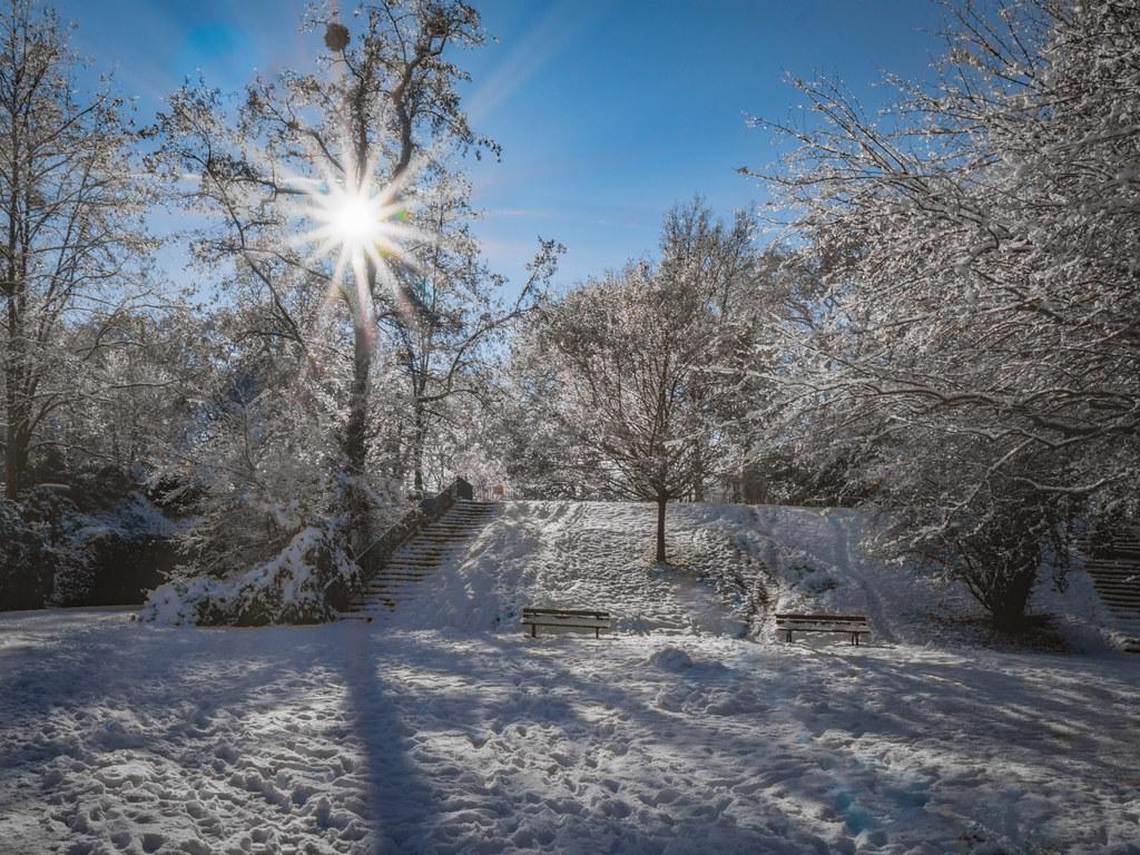 Soleil d'hiver au Parc... 50841826301_ba3c2525a6_b