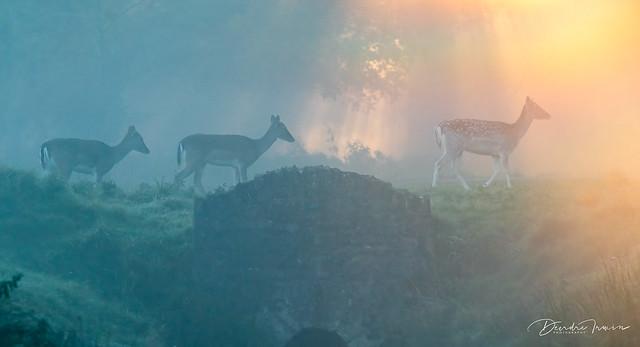 Mystical Dawn in the Park