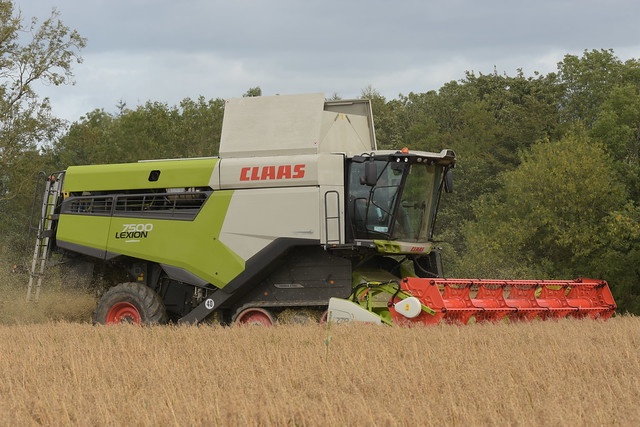 Claas Lexion 7500 Combine Harvester cutting Spring Oats