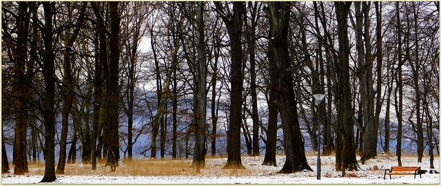 Zima w parku.