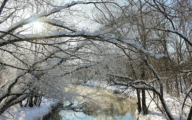 The Icy Breath of Russian Winter in Fabulous Moscow. Very frosty in the Leonovskaya Grove near Yauza River, Rostokino district. Ледяное Дыхание Русской Зимы.