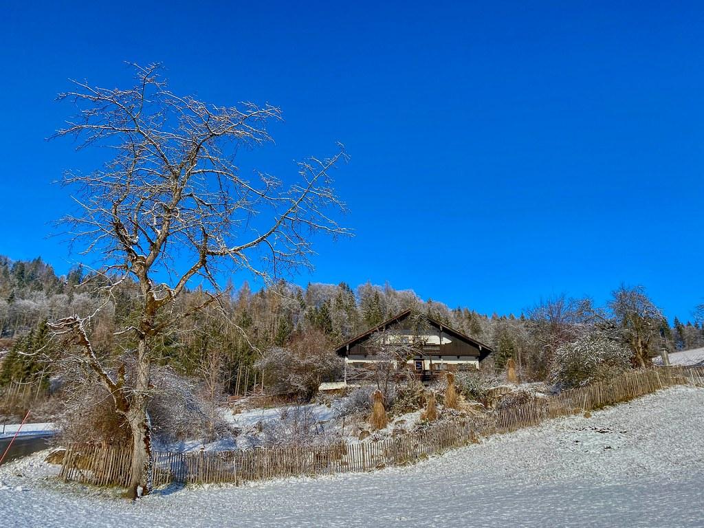 Tree and house in winter in Breitenau near Kiefersfelden in Bavaria, Germany