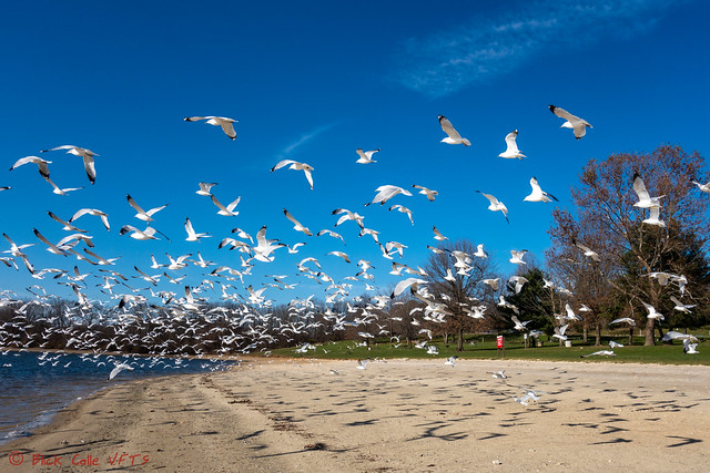 White Birds on Blue Sky