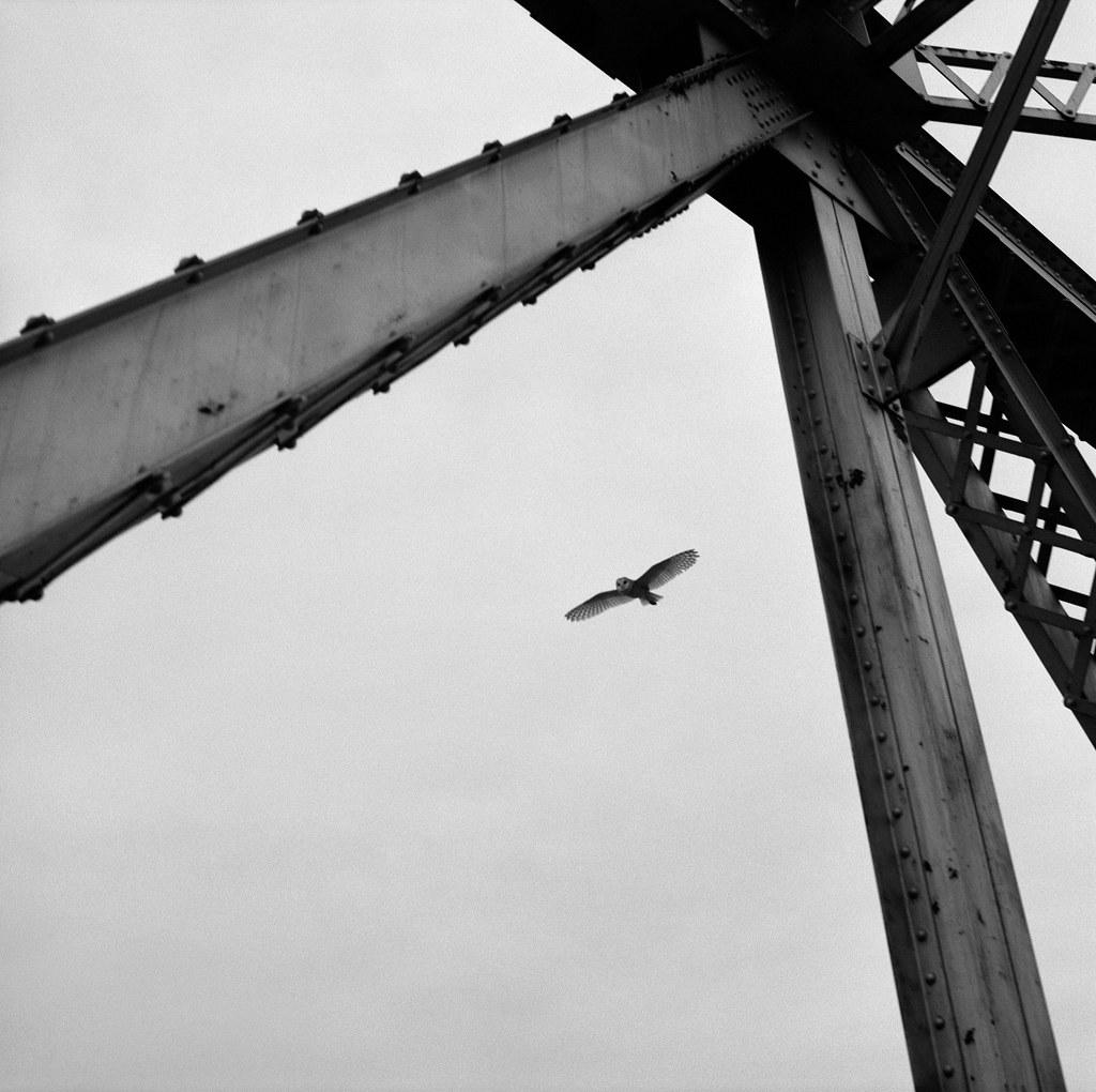 Owl from a Railroad Bridge, Eastern Washington