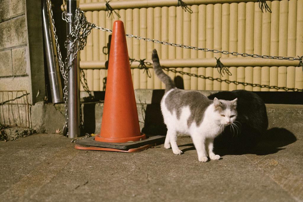 猫 2001/01/16 IMG_0649